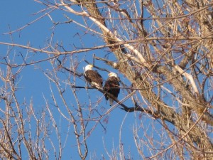 My 2 Eagles cropped