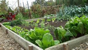 Community garden?
